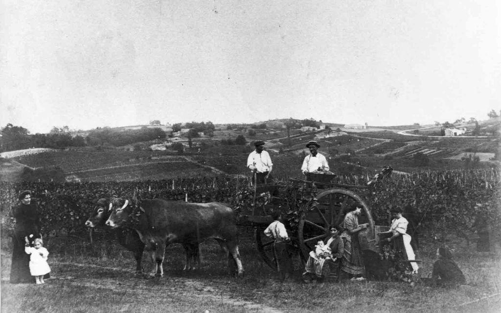 Scene de vendange en famille (la petite en blanc à gauche est l'arriere arriere grand mere a sebastien )