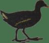 Poule D'eau Vignobles Turtaut