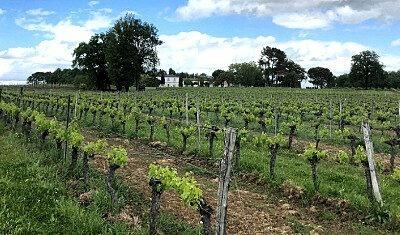 Vins de Bordeaux respectueux de l'environnement : notre philosophie
