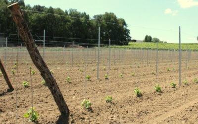 Plantation de nos Vignes aux portes de Sauveterre-de-Guyenne